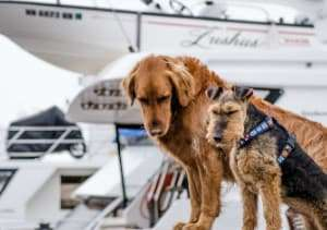 dogs with pet trackers with yachts on the background