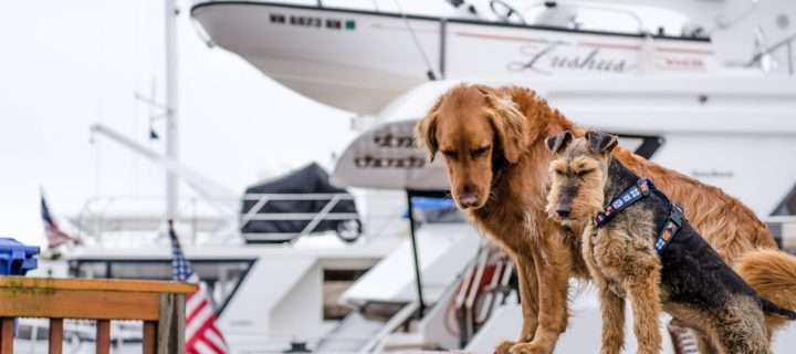 dogs with tagg gps trackers